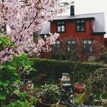 Spring time in Reykjavík