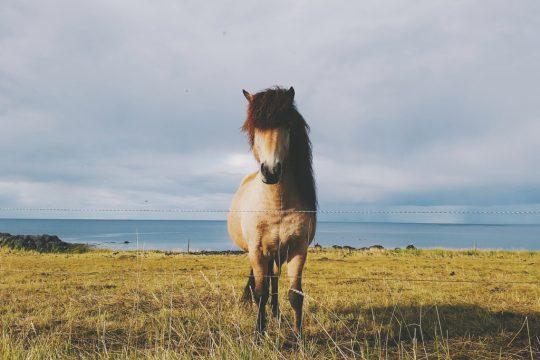 hestur.jpg